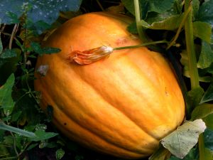 759858_the_great_pumpkin.jpg