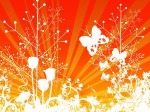 1001941_butterfly_sunrise
