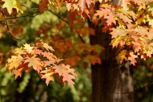 1226283_autumn_colours
