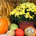 Giving Thanks With ME/CFS & Fibromyalgia
