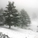 CFS & Fibromyalgia:  It's A Winter Storm Every Day