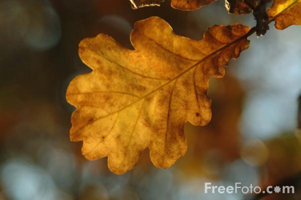 Autumn Brings CFS & Fibromyalgia Flares