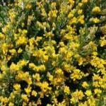 Springtime Brings Outdoor Poison Exposure Concerns
